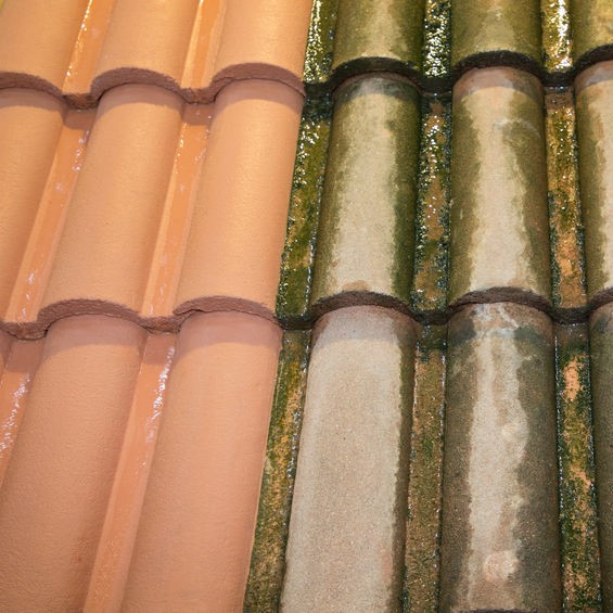tile roofing with algae